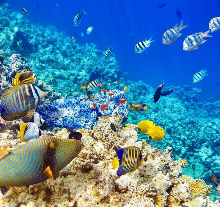 Red sea in Egypt| best place to relax in Egypt| EZ TOUR EGYPT