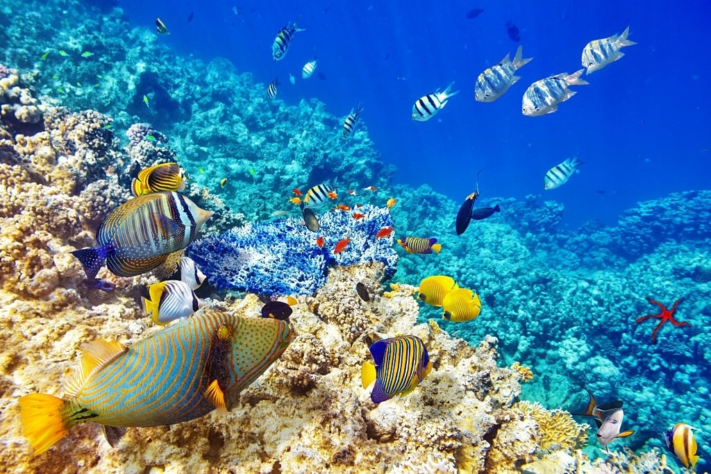 Red sea in Egypt  best place to relax in Egypt  EZ TOUR EGYPT